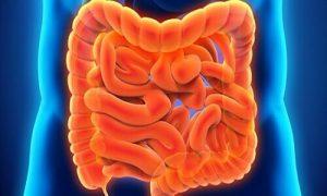 limpieza intestino